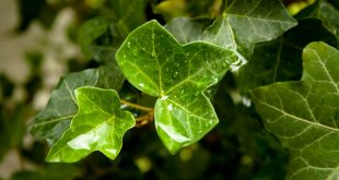 piante sistema immunitario