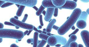 Università di Parma: lo studio sui batteri che colonizzano l'intestino