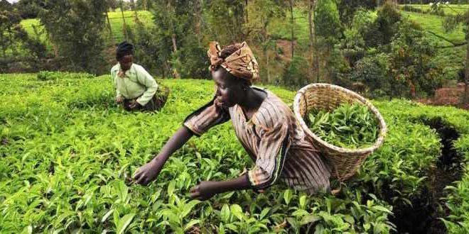 La ricerca italiana per lo sviluppo alimentare sostenibile
