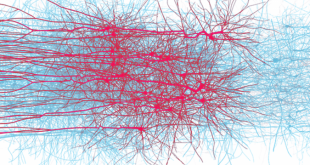 HPE aiuta l'EPFL a scoprire i segreti del cervello con il Blue Brain Project