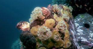 Tra stelle ed anemoni: scuole alla scoperta dell'ambiente marino